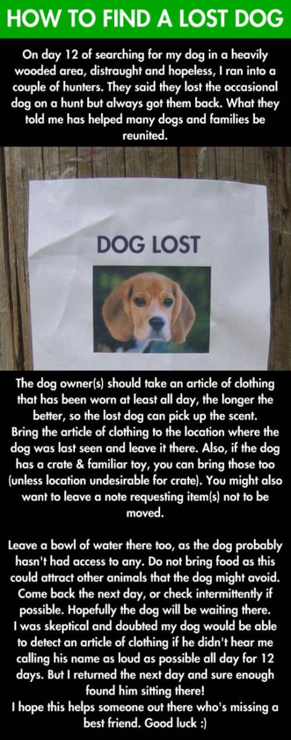 2-lost-dog-1