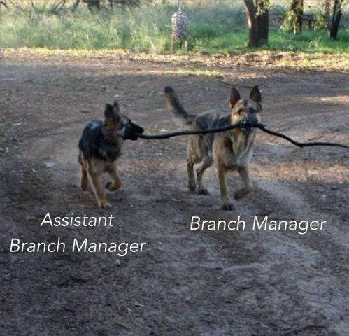 10-branch-manager
