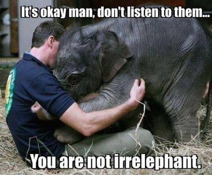 12-irrelephant