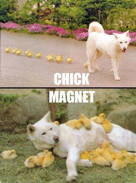 13-chick-magnet
