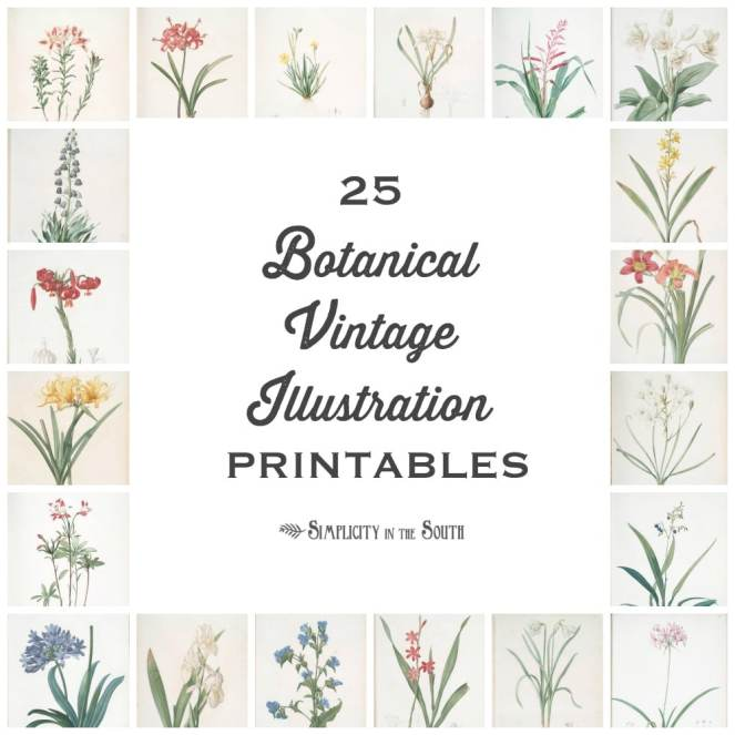 25-Botanical-Vintage-Illustration-free-printables-for-your-art-gallery (1).jpg