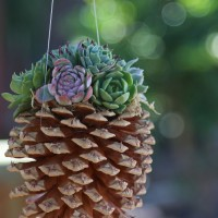 How to Make a PineCone Planter