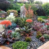 Succulents Gardening For The Beginner