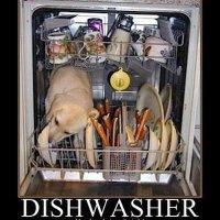 dishwasherdog