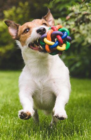 dog yoy