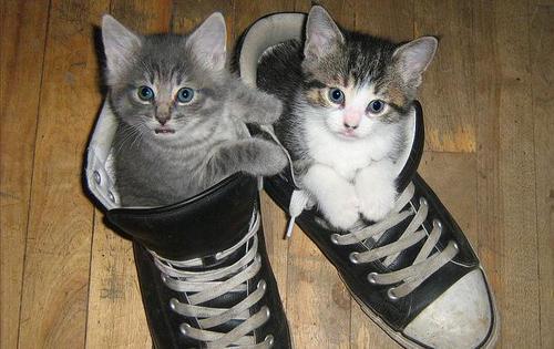 last kitty
