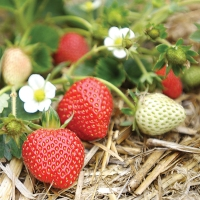 Best Warm Season Crops For Your Edible Garden