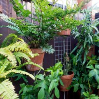 Gardening Ideas For Renters