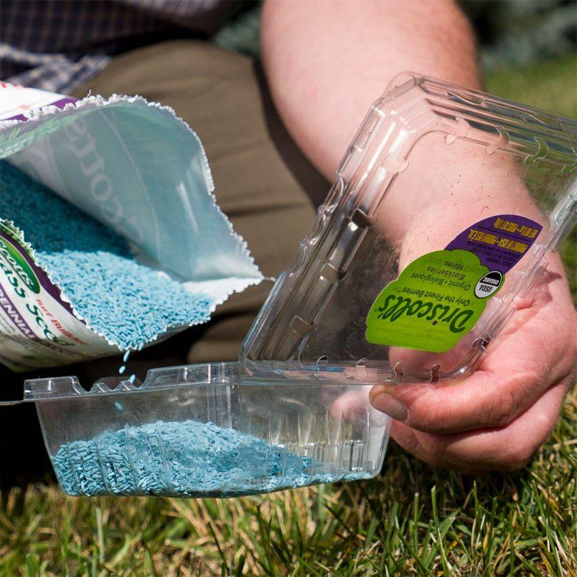 grass-seed-1.jpg