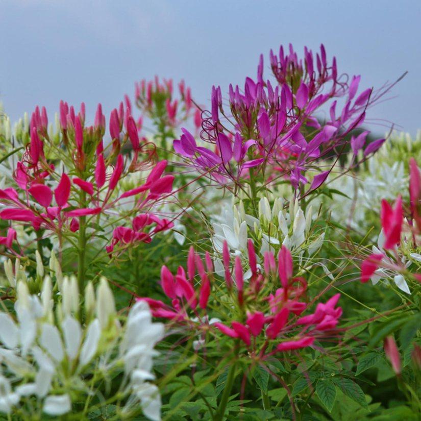 shutterstock_1038004444-flowers