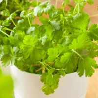 Best Herbs for Container Gardening